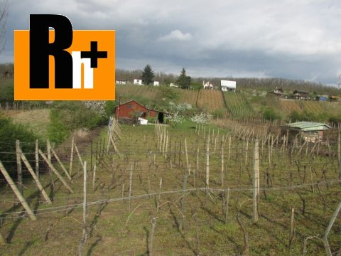 15. obrázok Kráľovský Chlmec . vinice, chmelnice na predaj - osobné vlastníctvo