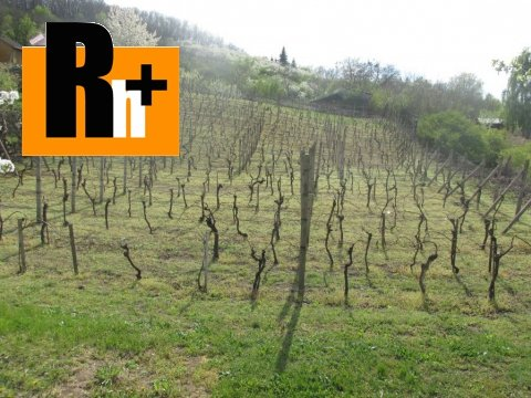 2. obrázok Kráľovský Chlmec . vinice, chmelnice na predaj - osobné vlastníctvo