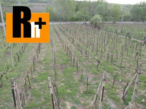 2. obrázok Na predaj vinice, chmelnice Viničky Tokajská vinohradnícka oblasť - exkluzívne v Rh+