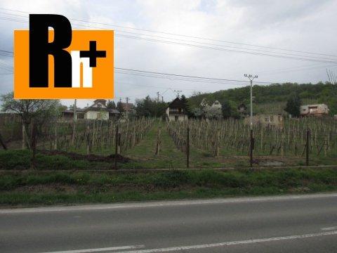 7. obrázok Na predaj vinice, chmelnice Viničky Tokajská vinohradnícka oblasť - exkluzívne v Rh+