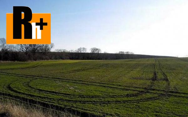 Foto Veľké Dvorany na predaj poľnohospodárska pôda - 42000m2