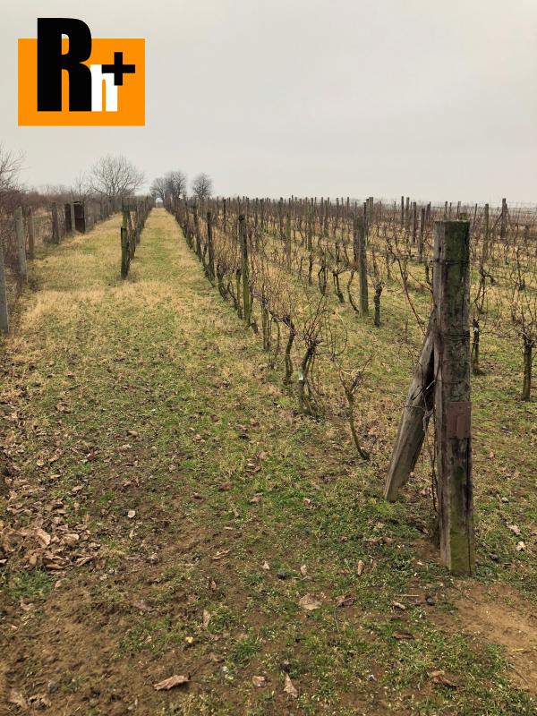 Foto Pribeta vinice, chmelnice na predaj - osobné vlastníctvo